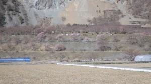 大鹿村 大西公園 桜 撮影 2014年4月12日 Takashi