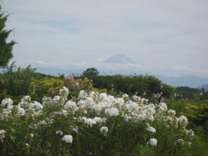 小淵沢からの富士山