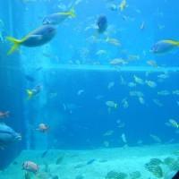 箱根園水族館 海水館