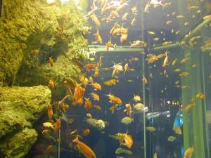 駿河湾の魚たち