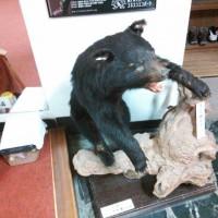 赤石荘 熊の剥製