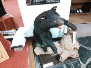 赤石荘 子熊の剥製