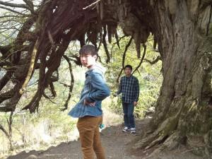 これは枝、根?