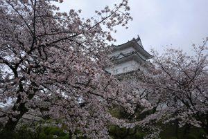 小田原城址公園の桜 撮影:2017年4月9日 カメラ:Nikon1 J1 レンズ:1NIKKOR 18.5mm