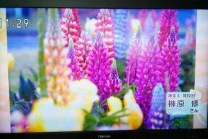 NHKひるまえほっと「季節の写真」