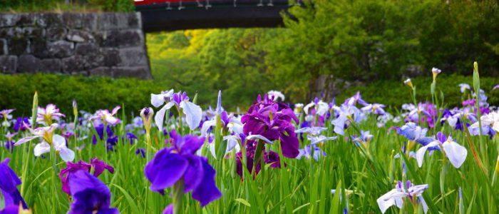 小田原城址公園2017年6月11日撮影 カメラ:Nikon1 J3 レンズ:1NIKKOR VR30-100mm