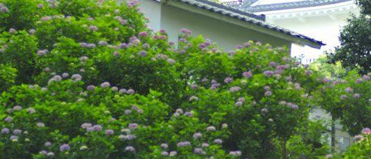 小田原城址公園2017年6月11日撮影 カメラ:Nikon1 J1 レンズ:シグマ50mmマクロ