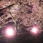 やまきた桜まつり④ 2017年4月8日撮影