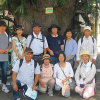 「ヒマラヤ杉」前で記念撮影