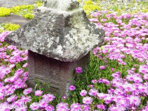 ⑫石祠と松葉菊