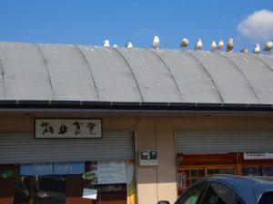 ⑥漁港食堂にて
