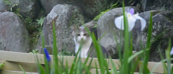 小田原城址公園2017年6月11日撮影 カメラ:Nikon1 J4 レンズ:1NIKKOR VR30-100mm