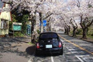 桜のトンネルよ、どこまでも