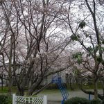 下島の桜2017年 屋敷下第1公園