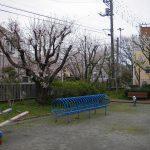 下島の桜2017年 屋敷下第2公園