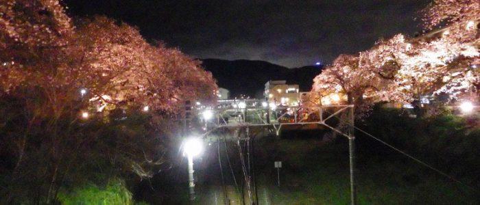 やまきた桜まつり③ 2017年4月8日撮影