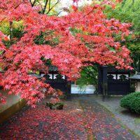 長泉院の紅葉 2016年11月20日撮影