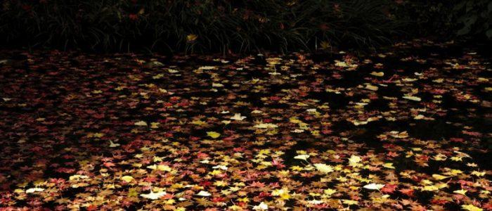 道了山の紅葉 2017年11月19日