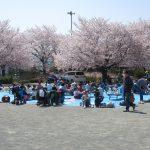 2018年3月31日 下島桜まつり開催