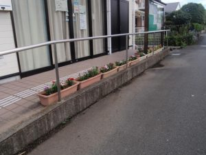 自治会館前のお花達①