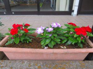 自治会館花壇植え替え