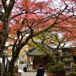 大雄山最乗寺の紅葉 2017年11月19日
